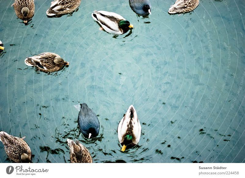556 bitte schön knusprig und scharf! Wasser Wellen Tier Wildtier Vogel Flügel Tiergruppe Bewegung Ente Erpel Feder Im Wasser treiben Schwimmen & Baden Farbfoto