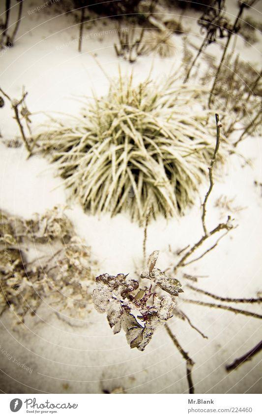 winterlich II Natur Pflanze Winter Eis Frost Schnee Garten dunkel kalt weiß Blatt Gedeckte Farben Außenaufnahme Menschenleer Tag Unschärfe Vogelperspektive