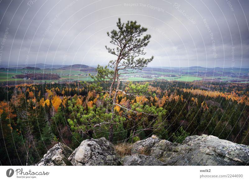 Bellevue Umwelt Natur Landschaft Pflanze Wolken Herbst Schönes Wetter Baum Felsen Gipfel Zittauer Gebirge Dreiländereck Lausitz Sachsen Deutschland hoch oben