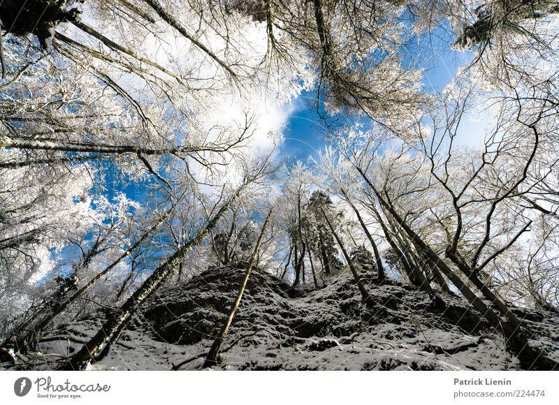 Wolfsschlucht Umwelt Natur Landschaft Urelemente Luft Himmel Wolken Winter Wetter Schönes Wetter Schnee Pflanze Baum Wald Hügel Felsen Berge u. Gebirge Schlucht