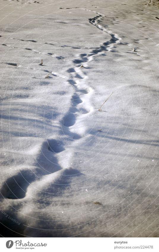 Der Yeti glaubt nicht an Reinhold Messner. Natur Klimawandel Wetter Eis Frost Schnee weiß Spuren Fußspur Winter Farbfoto Außenaufnahme Menschenleer Tag Licht
