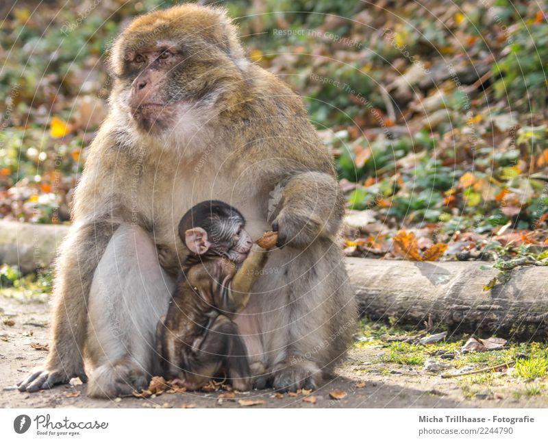 Familienleben Natur Pflanze grün Sonne Baum Tier Blatt Wald Tierjunges gelb Auge Liebe orange Zusammensein Frucht Wildtier