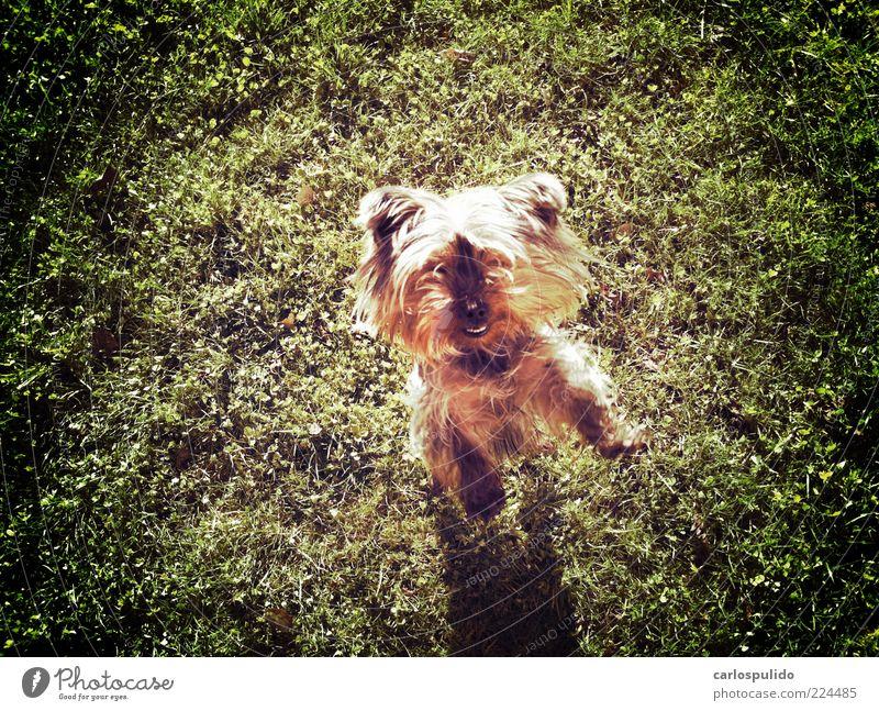 Tier springen Hund Feld Rasen genießen Haustier Tierfreund