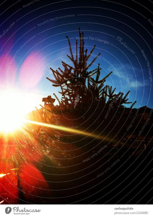 Natur schön Himmel Baum Sonne Farbe Berge u. Gebirge Feld Alpen natürlich Tanne Kiefer Sonnenaufgang Blitzreflexion