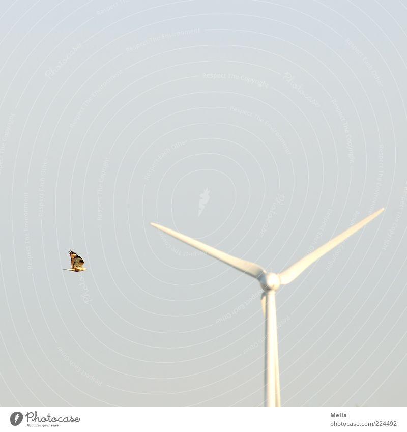Achtung, Gefahrenstelle Himmel weiß blau Tier Freiheit Umwelt Bewegung Luft Vogel Fliege fliegen frei Energiewirtschaft gefährlich Zukunft bedrohlich