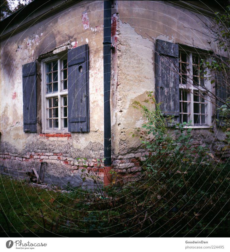 der Gärtner kam nicht. II Umwelt Natur Pflanze Gras Sträucher Haus Hütte Mauer Wand Fassade alt Armut ästhetisch authentisch trist trocken viele wild Gefühle