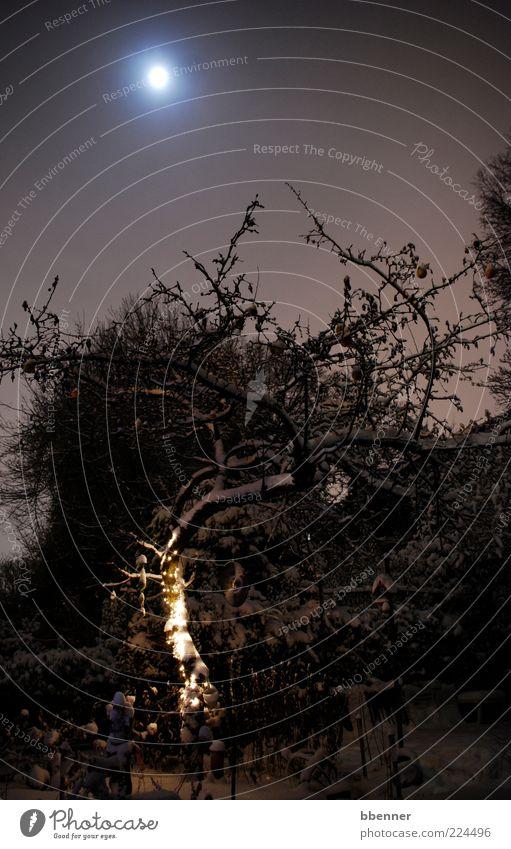 Verzauberter Garten Dekoration & Verzierung Umwelt Natur Wasser Himmel Nachthimmel Mond Winter Schnee Baum Sträucher Kitsch Krimskrams Lichterkette Holz