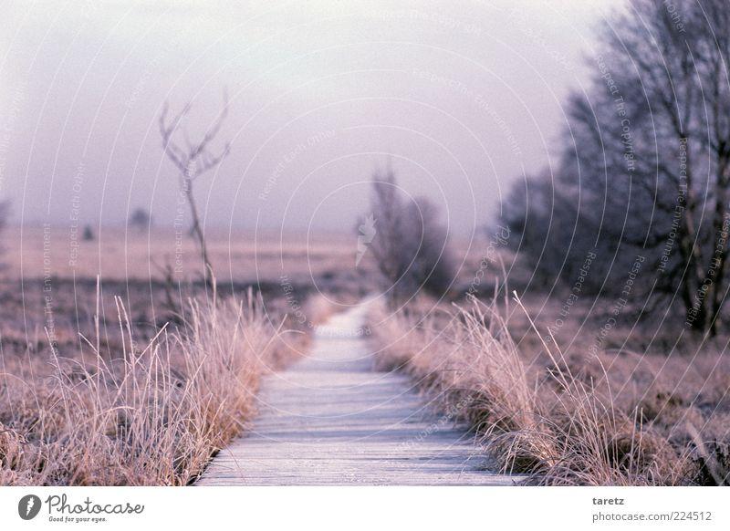 Frische Wege gehen Natur ruhig Winter Ferne Landschaft Gras Umwelt Wege & Pfade Nebel leer Zukunft Sträucher Belgien Schönes Wetter vertrocknet Erwartung