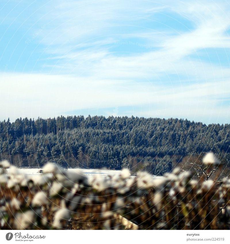 one winter day Umwelt Natur Landschaft Pflanze Himmel Baum Wiese Feld Wald Hügel frieren hoch Frost kalt Hecke Farbfoto Außenaufnahme Textfreiraum oben Tag