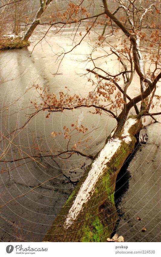 Karpfenteich Umwelt Natur Landschaft Pflanze Winter Klima Wetter Eis Frost Schnee Baum Grünpflanze Seeufer Insel Teich authentisch kalt nass natürlich schön