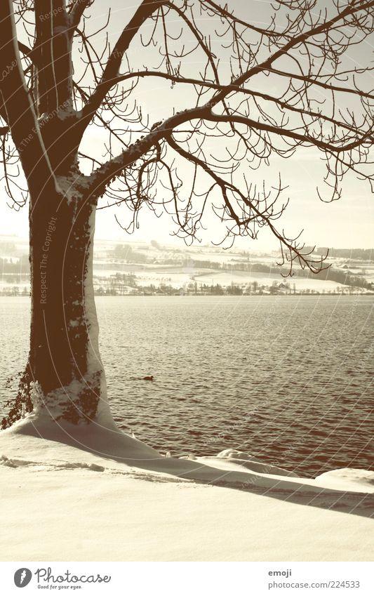 Seeufer Natur weiß Baum Pflanze Winter Tier Schnee Landschaft Umwelt braun Klima Ast Baumstamm Ente