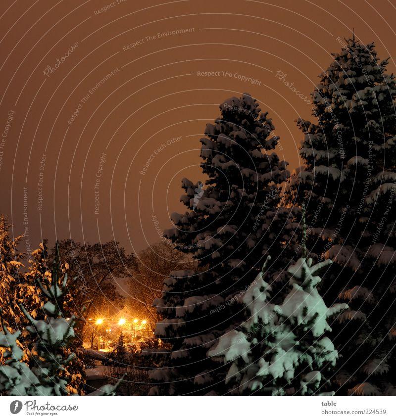 Winter aufm Dorf Himmel weiß Baum Pflanze ruhig schwarz gelb kalt dunkel Schnee gold Klima Romantik leuchten Straßenbeleuchtung