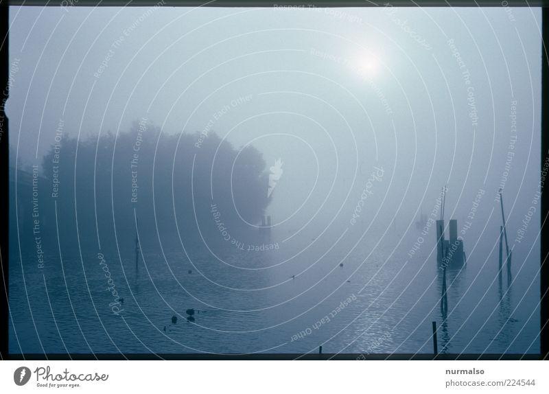 Mystic Morning Umwelt Natur Landschaft Pflanze Klima Wetter Nebel Baum Wildpflanze Flussufer Havel dunkel weich Stimmung Morgen Licht Schatten Silhouette