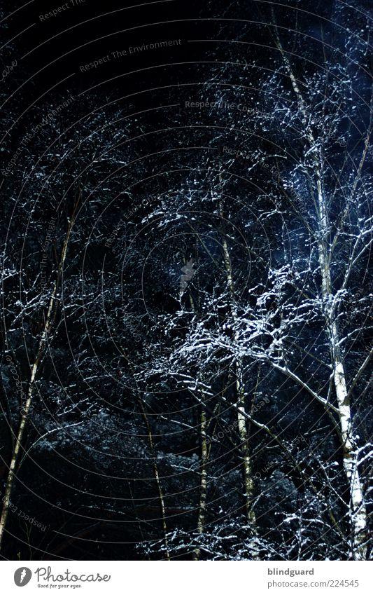 Ghost Trees Natur weiß Pflanze schwarz Wald kalt dunkel Schnee Holz Eis Frost Birke