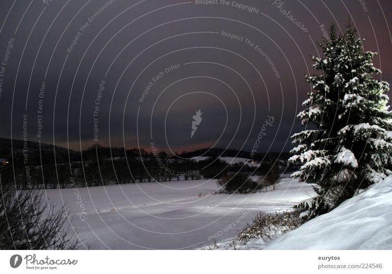 one winter night Umwelt Natur Landschaft Pflanze Winter Klima Wetter Schnee Feld Wald weiß Tanne Farbfoto Außenaufnahme Textfreiraum oben Dämmerung Nacht