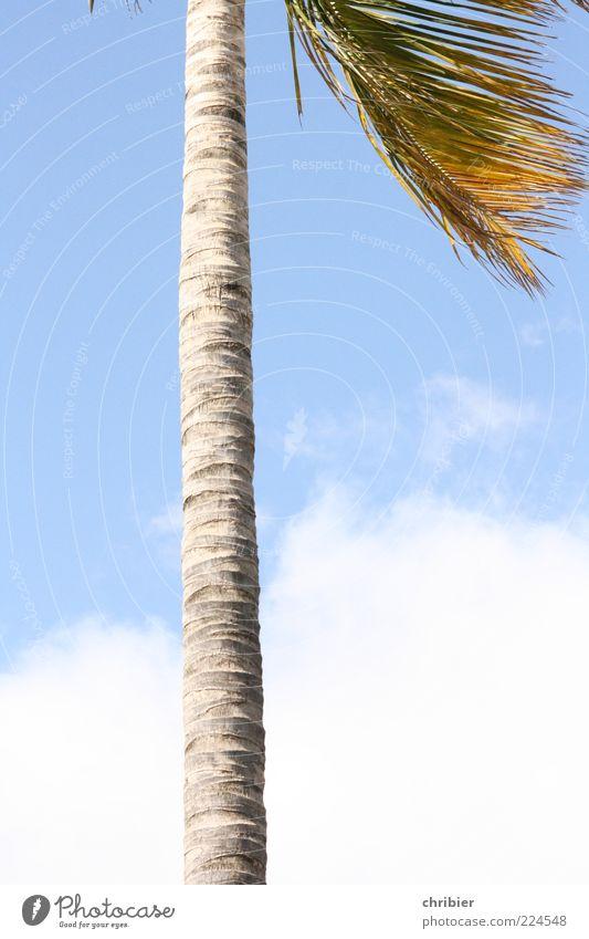 Heiß... Himmel Natur weiß blau Sommer Wolken grau groß Wachstum dünn Palme aufwärts Baumstamm exotisch gerade Anschnitt