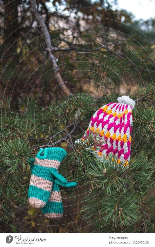 Winterhut und -handschuhe auf einem Baum Natur Herbst Wetter Wärme Wald Bekleidung Accessoire Handschuhe Hut weiß Tanne Ast Weihnachten kalt Fäustlinge Wolle