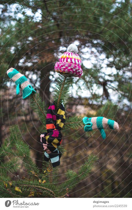 Wintermütze, Schal und Handschuhe auf einem Baum Natur Herbst Wetter Wärme Wald Bekleidung Accessoire Hut weiß Tanne Ast Weihnachten kalt Fäustlinge Wolle
