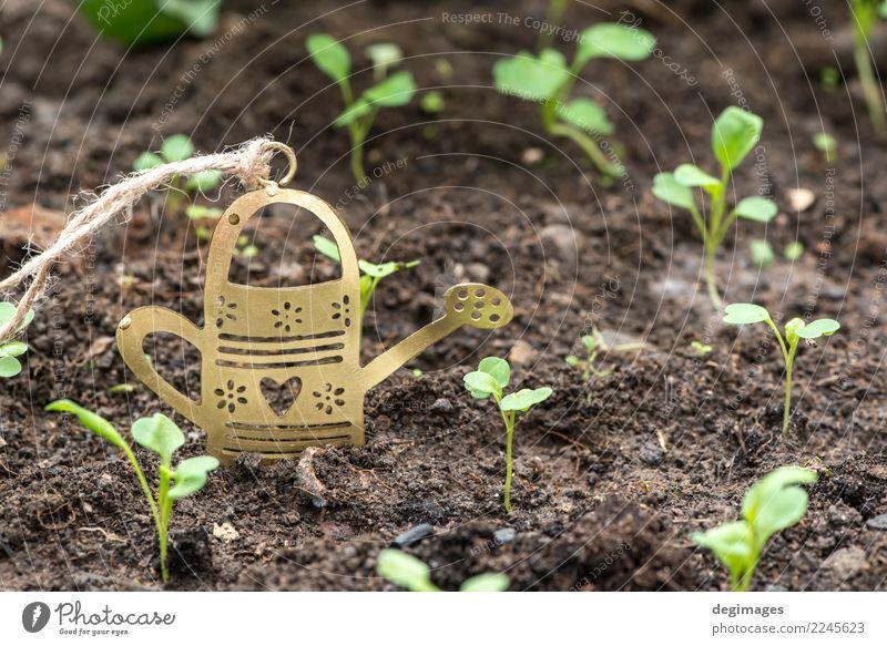 Blume kann im Garten Topf schön Sommer Arbeit & Erwerbstätigkeit Gartenarbeit Natur Pflanze Gras Dose Metall Wachstum grün Bewässerung Miniatur Wasser Frühling