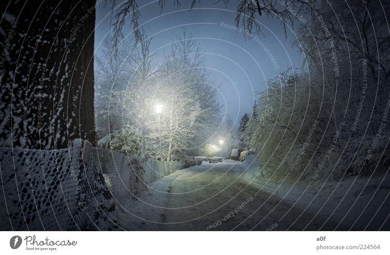 winter street Baum blau Winter Straße kalt dunkel Schnee Lampe Verkehrswege Baumstamm erleuchten Straßenbeleuchtung Baumrinde Zweige u. Äste