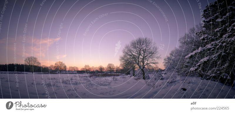 waldrand Himmel Baum Winter Einsamkeit Ferne Wald kalt Schnee Feld violett fantastisch frieren Abend Zweige u. Äste Waldrand