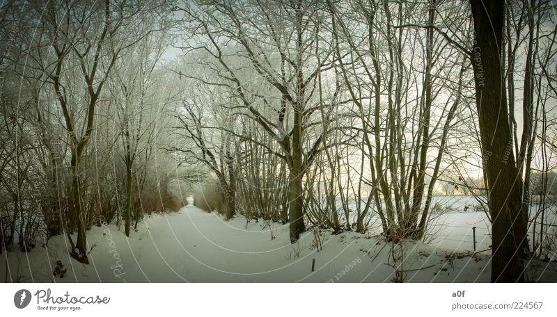 Weg zwischen Bäumen Natur Baum Winter Wald kalt Schnee Landschaft Umwelt Wege & Pfade braun Abend Zweige u. Äste