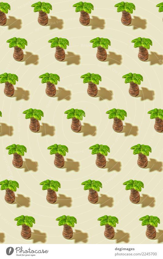Palm Muster exotisch Leben Spa Sommer Natur Pflanze Baum Blatt Wald hell grün weiß Handfläche Hintergrund tropisch Konsistenz Kokosnuss vereinzelt Handflächen