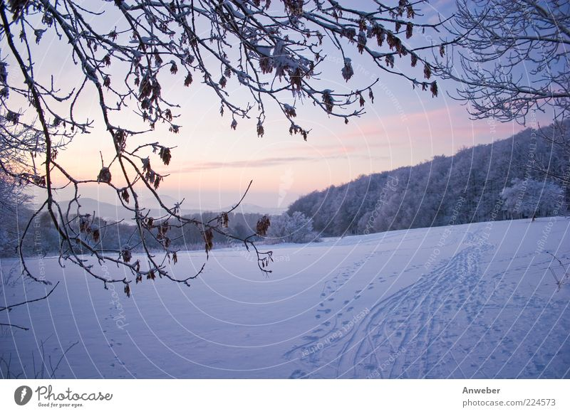 Neulich im Schnee... Natur weiß blau Pflanze Winter Blatt kalt Wiese Schnee Berge u. Gebirge Landschaft Umwelt Stimmung hell Park Wetter