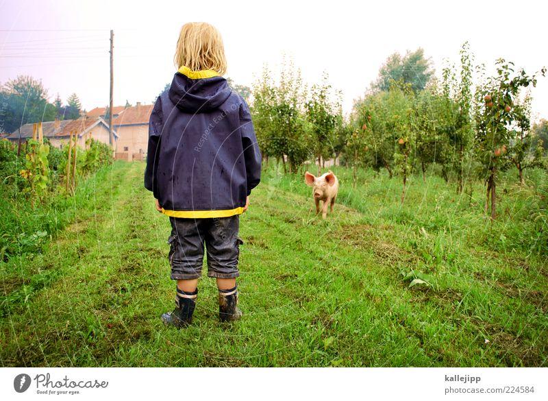 2011 - viel glück! Mensch Kind Natur Tier Leben Wiese Junge Glück Feld Tierjunges warten laufen Kindheit stehen Rasen außergewöhnlich