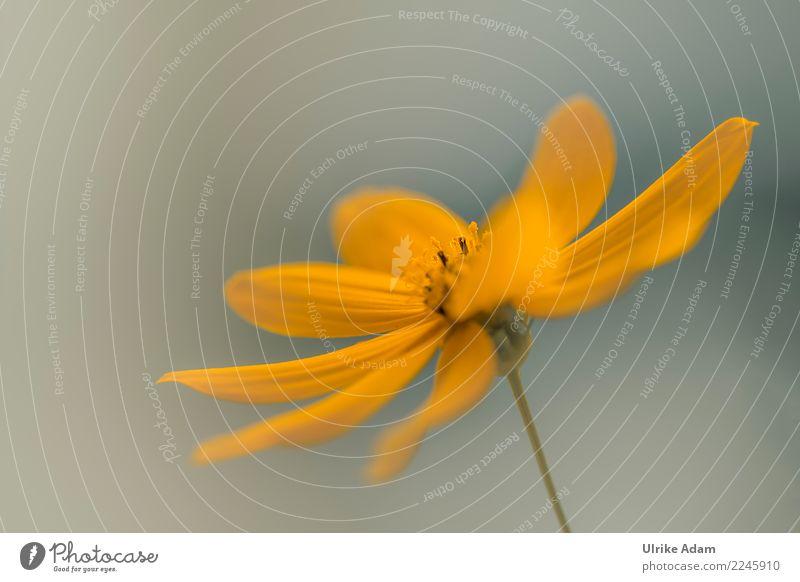 Gelbe Blume - Sommerzeit harmonisch Innenarchitektur Dekoration & Verzierung Tapete Postkarte Feste & Feiern Valentinstag Muttertag Hochzeit Geburtstag Natur