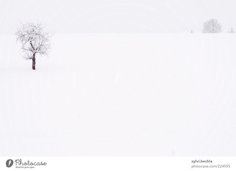 Ein Hauch von Nichts - Teil II Umwelt Natur Landschaft Himmel Winter Klima schlechtes Wetter Schnee Baum Wiese Feld kalt grau schwarz weiß Einsamkeit Horizont