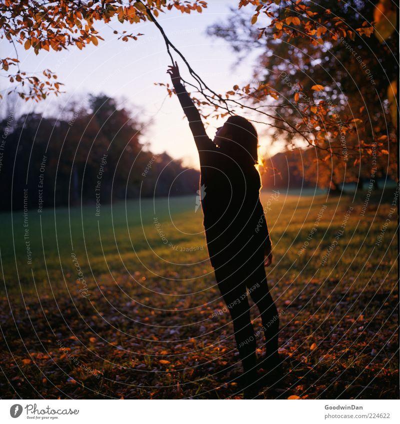 [ 300 ] Reaching out Frau Mensch Natur Jugendliche schön Pflanze Herbst Landschaft Umwelt Park Erwachsene Wetter frei stehen Urelemente Ast