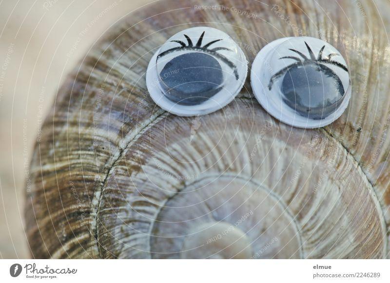 funny snails (9) Design Freude schön Basteln Schnecke Weinbergschnecken Schneckenhaus Gehäuse Spirale Windung Auge Augenaufschlag Wimpern Coolness elegant