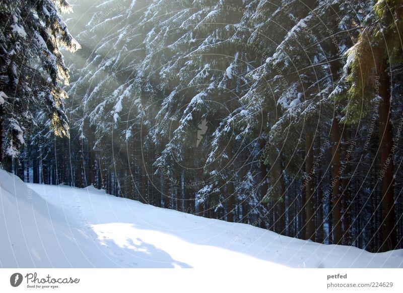 ... und Gott sprach Baum ruhig Winter Wald kalt Schnee Wege & Pfade Schönes Wetter Fußweg Winterurlaub Nadelbaum Lichteinfall Nadelwald Winterstimmung Waldrand Schneedecke