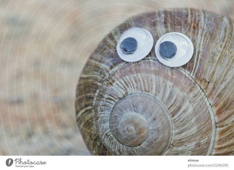 funny snails (1) Schnecke Schneckenhaus Linie Spirale Auge Augenzeuge beobachten Blick Spielen Coolness nah Neugier niedlich Freude Glück Fröhlichkeit