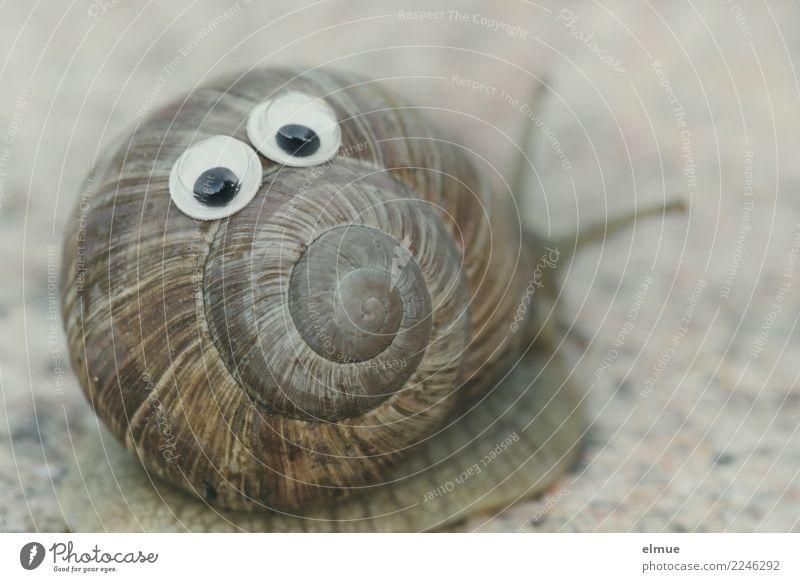 funny snails (5) Schnecke Weinbergschnecken Schneckenhaus Fühler Auge Spirale Gesichtsausdruck Drehgewinde Fröhlichkeit lecker nah schleimig Freude Lebensfreude