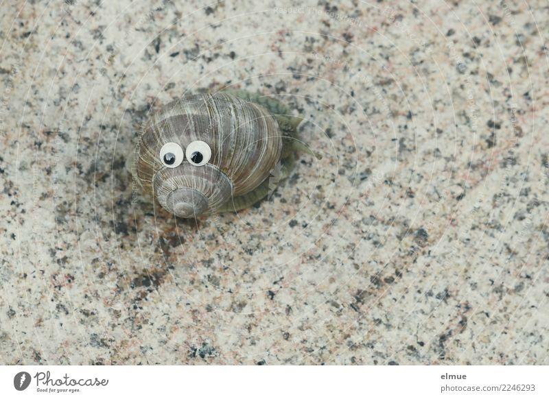 funny snails (4) Schnecke Weinbergschnecken Schneckenhaus Drehgewinde Spirale Gehäuse Auge Gesichtsausdruck lustig schleimig Freude Gelassenheit Trägheit