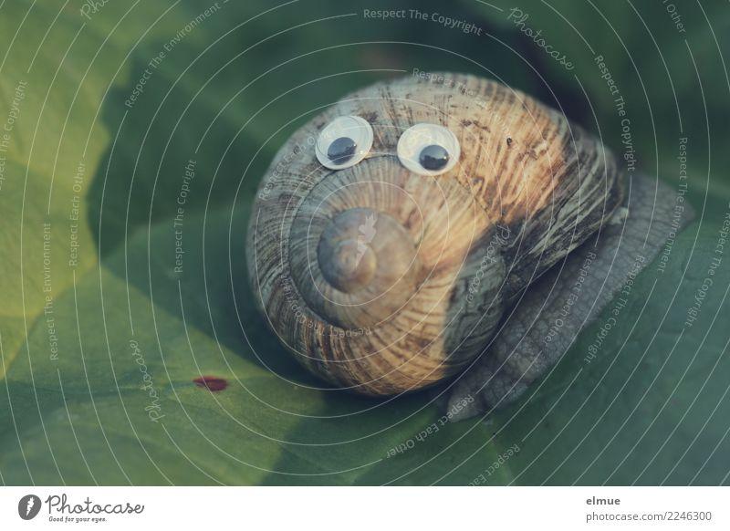 funny snails (7) Design Freude Gesicht Basteln Blatt Schnecke Weinbergschnecken Schneckenhaus Gehäuse Spirale Auge Drehgewinde Kalkschale Kitsch nah schleimig