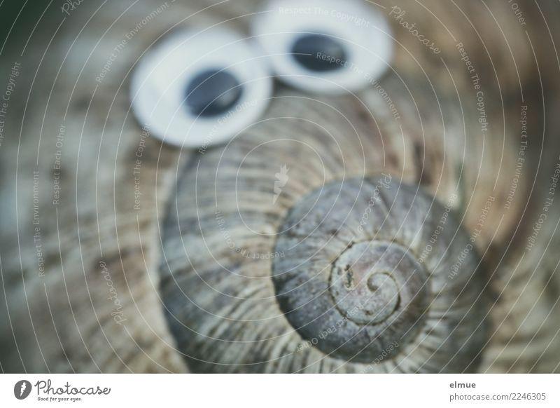 funny snails (3) Freude Auge Design Freizeit & Hobby träumen Kindheit Kommunizieren Kreativität Lebensfreude niedlich beobachten entdecken Kitsch nah Kontakt