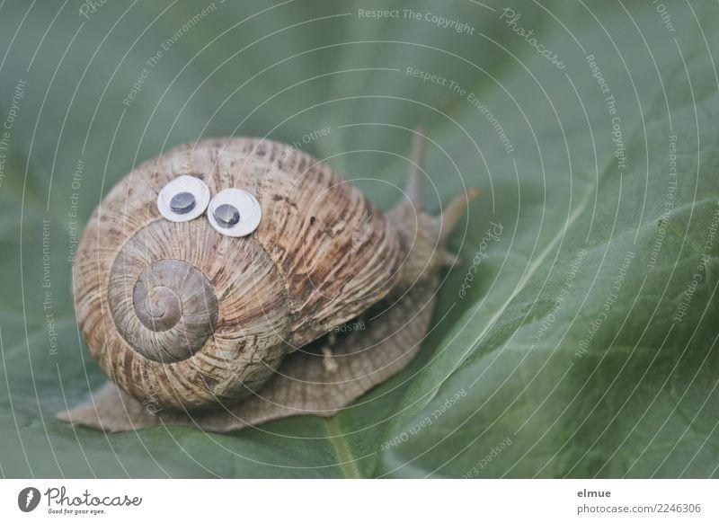 funny snails (2) Natur Blatt Freude Auge Wege & Pfade Design Zufriedenheit Wildtier verrückt Fröhlichkeit Lebensfreude Geschwindigkeit Idee Ziel Inspiration