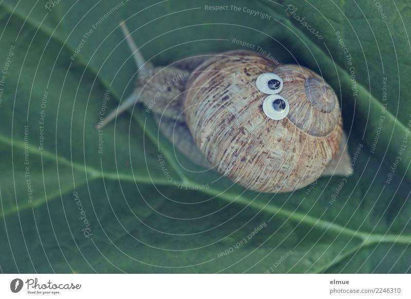 funny snails (8) Design Freude Basteln Dekoration & Verzierung Schnecke Weinbergschnecken Schneckenhaus Auge Fühler Gehäuse Kalkschale Spirale Drehgewinde