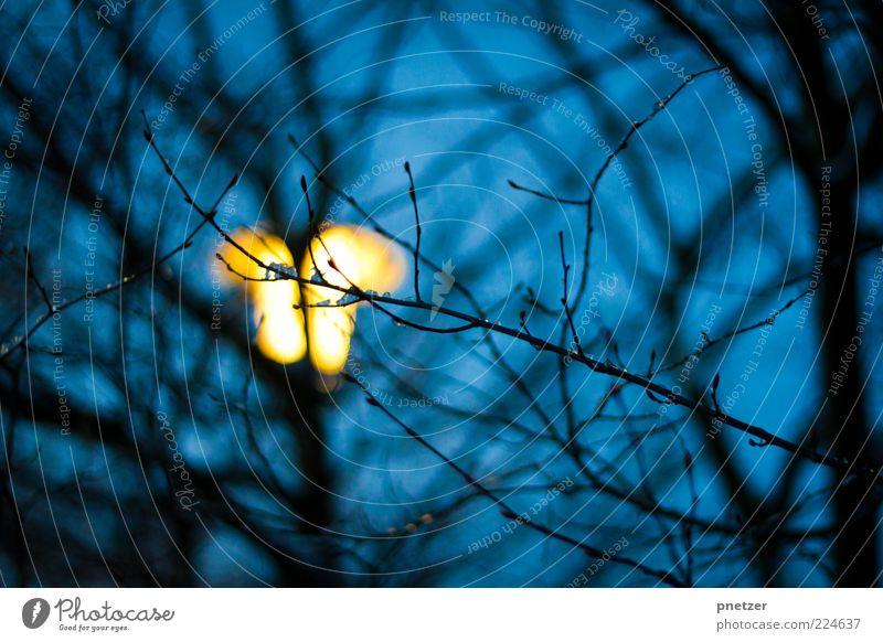 Licht im Dunkeln Natur Himmel Winter Pflanze Baum leuchten hell kalt blau gelb Gefühle Laterne Beleuchtung Eis frieren Nacht dunkel Farbfoto Außenaufnahme