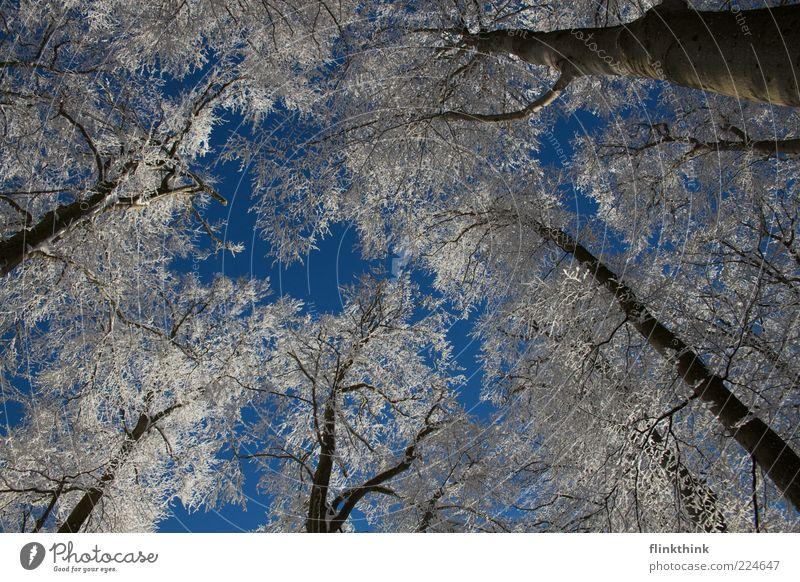 Winterzauber #2 Schnee Umwelt Natur Himmel Wolkenloser Himmel Sonnenlicht Baum Ast frieren schön Stimmung Menschenleer Tag Licht Kontrast Baumkrone