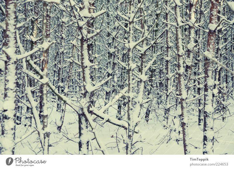 Lost in Winter Natur Baum Winter Wald Schnee Landschaft Umwelt Angst Sträucher Ast Baumstamm verloren Schneelandschaft Zweig Versteck Waldboden