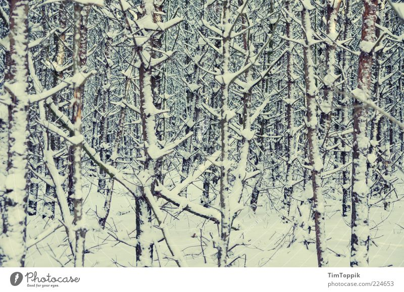 Lost in Winter Umwelt Natur Landschaft Angst Schneelandschaft Schneedecke Wald Waldboden Baum Baumstamm Winterstimmung Wintertag Sträucher verloren Unterholz
