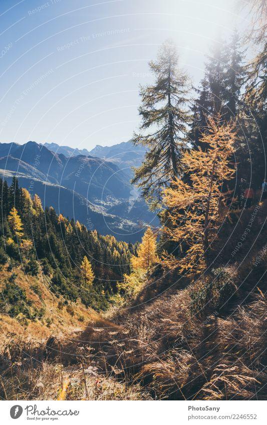 Lichtspiel Natur Landschaft Himmel Wolkenloser Himmel Sonne Herbst Schönes Wetter Wald Berge u. Gebirge blau braun gelb gold orange Tourismus Schweiz