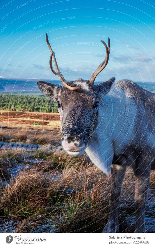 It's me, Rudolph. Tier Wildtier Tiergesicht 1 atmen beobachten entdecken Erholung Essen füttern genießen Lächeln wandern authentisch elegant frei Glück