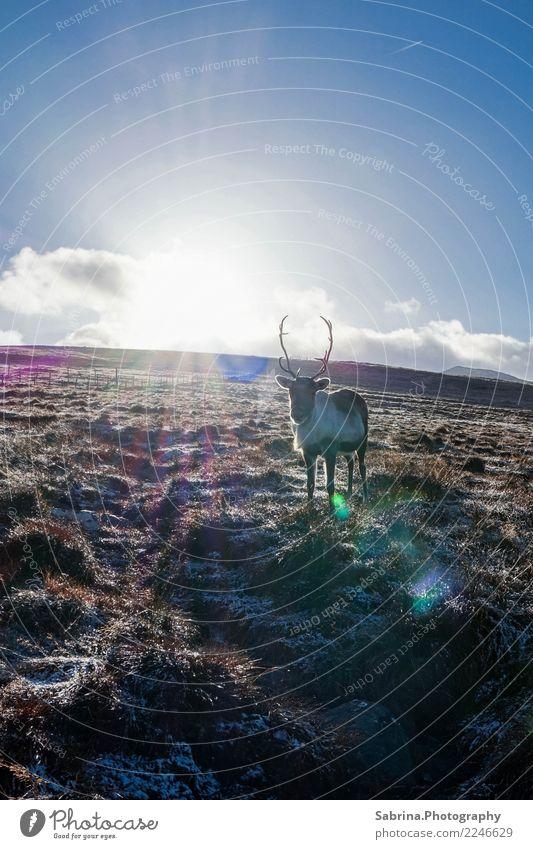 Sonne tanken. Natur blau weiß Landschaft Erholung Tier Wolken Winter Berge u. Gebirge Herbst Wiese Gras Glück braun wild