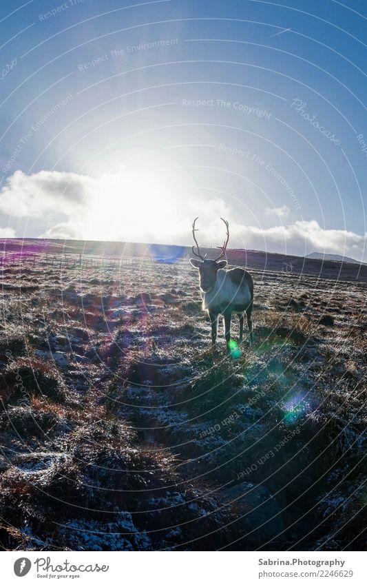 Sonne tanken. Natur Landschaft Wolken Sonnenlicht Herbst Winter Schönes Wetter Gras Sträucher Wiese Berge u. Gebirge Tier 1 beobachten Erholung ästhetisch frei