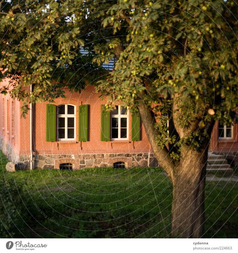 Abendstimmung Natur Baum schön Einsamkeit Leben Erholung Wiese Fenster Garten Gras träumen elegant Zeit Treppe Lifestyle Romantik